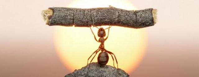 Lineage II: LA2: Жизнь в муравейнике