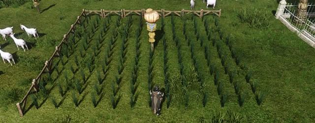 Archeage: AA: Для кого огороды городим?