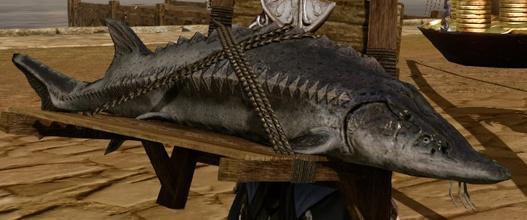 Archeage: Большая рыба