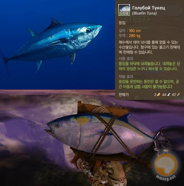 Archeage: AA: Голубой Тунец
