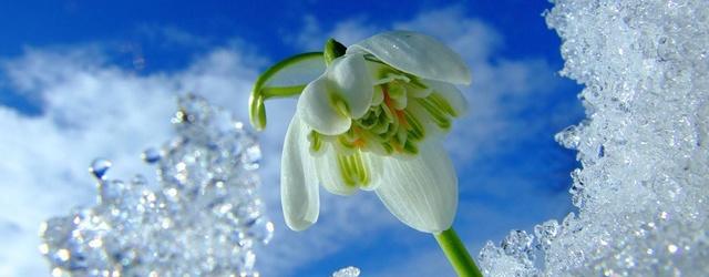 mmozg.net: Весна близко