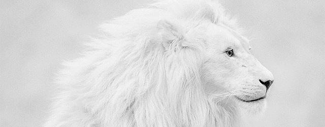 EVE Online: Белый, белый, конопатый, убил дедушку лопатой