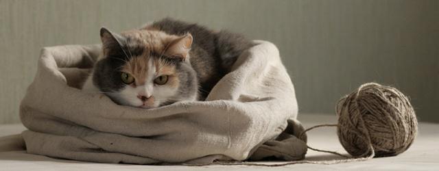 ArcheAge: Котики без упаковки