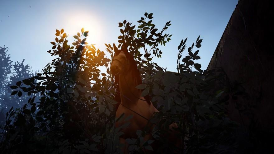 Black Desert: Путь проложен! Эльфийские каникулы: Ядовитый лес