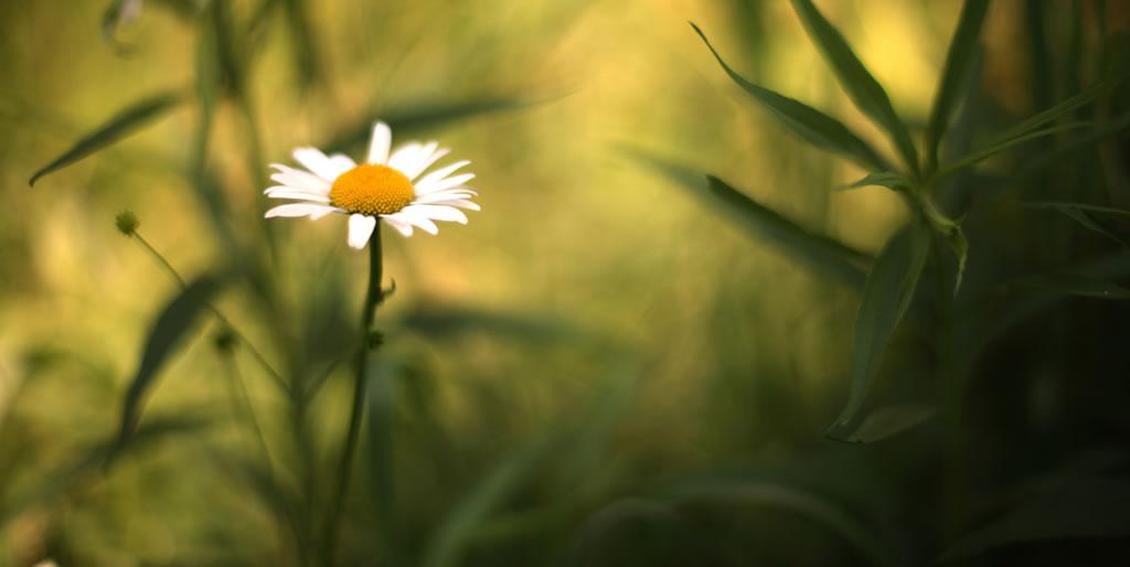 Haven and Hearth: Про то, как я ходил за тридевять земель, и о сокровищах Кощея Бессмертного