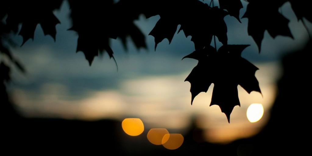 Эхо: Плей-лист летних ночей